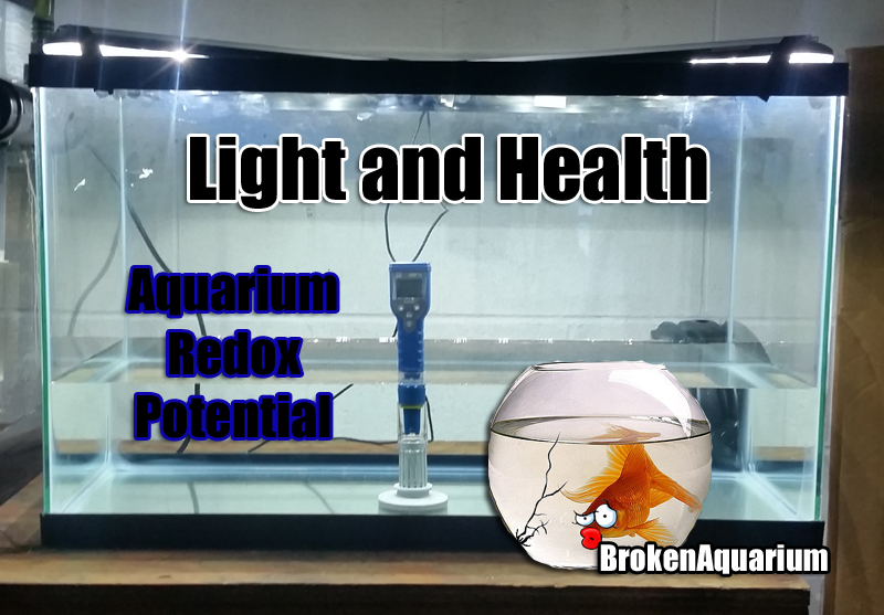 Light and fish health